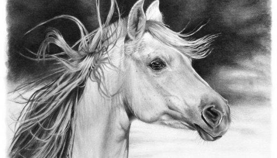 Imágenes de lápiz de caballos