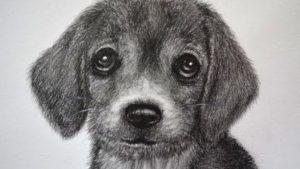 dibujos a lapiz de perros cachorros