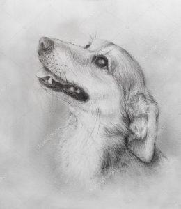 dibujos a lapiz de perros paso a paso