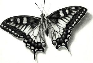 dibujos de mariposas con lapiz