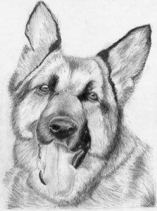 Dibujos A Lápiz De Perros Dibujos A Lápiz