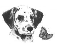 ▷ Dibujos a lápiz de Perros