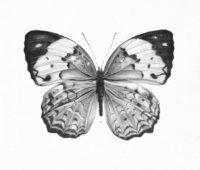 ▷ Dibujos a Lápiz de Mariposas