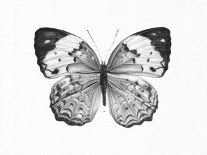 dibujos para niños de mariposas a lápiz