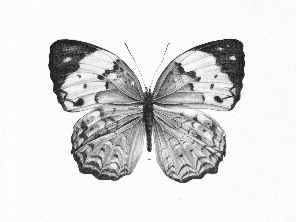 Dibujos A Lápiz De Mariposas Dibujos A Lápiz