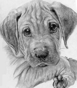 dibujos perros en lapiz