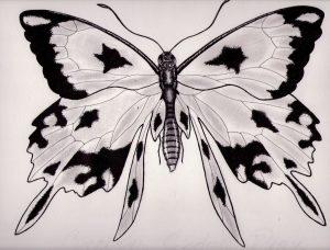 mariposas a lapiz