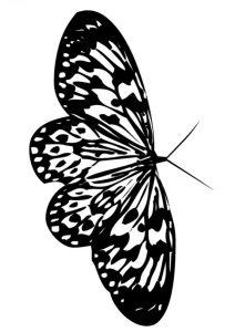 mariposas con lapiz