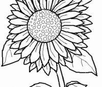 dibujar girasoles a lapiz