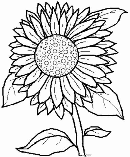 Dibujos De Girasoles A Lápiz Dibujos A Lápiz