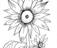 dibujo de girasol