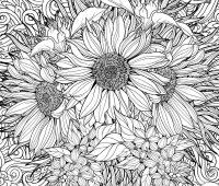 dibujos a lapiz de girasoles