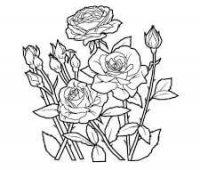 dibujos chidos de rosas