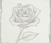 dibujos chidos de rosas a lapiz
