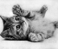 Dibujos a Lápiz de Gatos