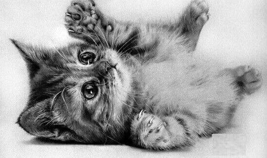 dibujos de gatos tiernos a lápiz