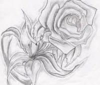 dibujos de lapiz de rosas