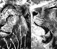 dibujos de leon