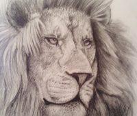 dibujos de leones a lapiz chidos