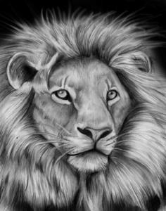 dibujos de leones a lapiz realistas