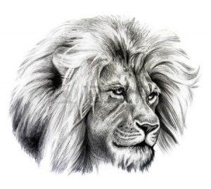 dibujos de leones a lapiz rostro