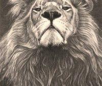 dibujos de leones para lapiz