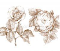 dibujos de rosas con lápiz chidas