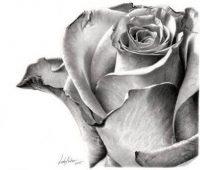 dibujos de rosas y flores