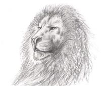 leon a lapiz