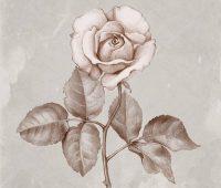 rosa a lapiz chida