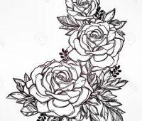 rosas a lapiz