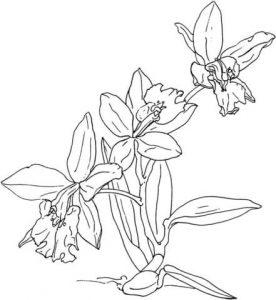 Dibujos de Orquídeas