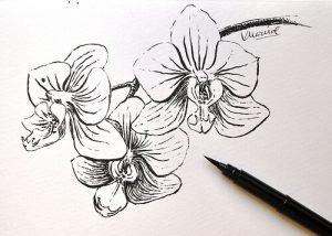 Dibujos de Orquídeas a lápiz