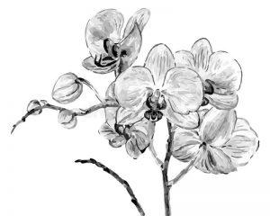 Dibujos de Orquídeas bonitos