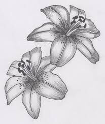 Dibujos de Orquídeas chidos