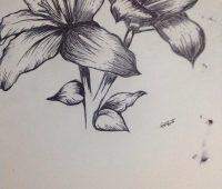 Dibujos de Orquídeas para descargar