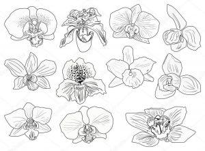 Dibujos de Orquídeas para imprimir