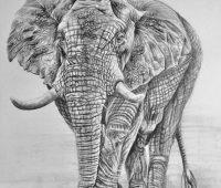 dibujos de elefantes a lápiz