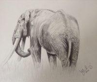 dibujos de elefantes con lápiz
