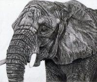 dibujos de elefantes realistas