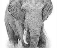 elefante con lápiz