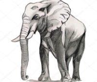 elefante hecho a lápiz