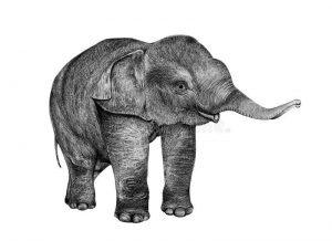 elefantito a lápiz