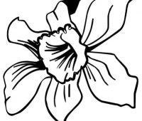orquídea a lápz