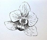 orquidea con lápiz