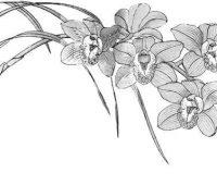 orquideas a lápiz