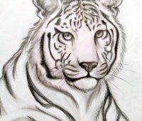 Dibujos de Tigres alaska