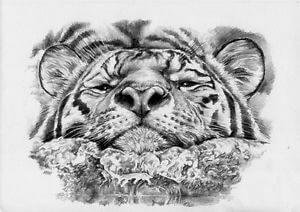 Dibujos de Tigres chidoris