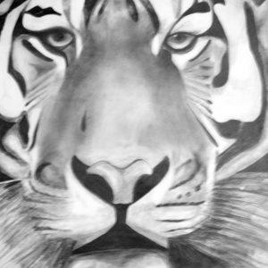 Dibujos de Tigres imagen
