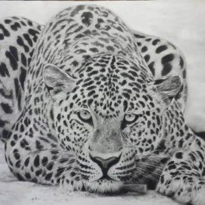 Dibujos de Tigres lindos